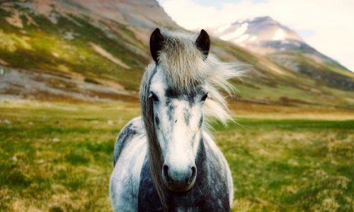 Vacances en Islande: randonnée expédition à cheval