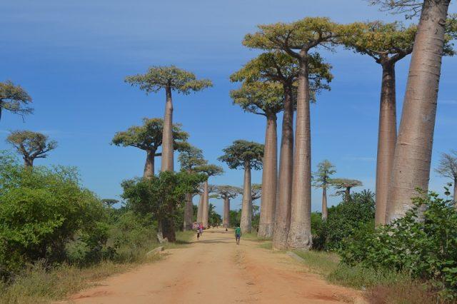 L'Afrique, un plan idéal pour ses vacances à venir